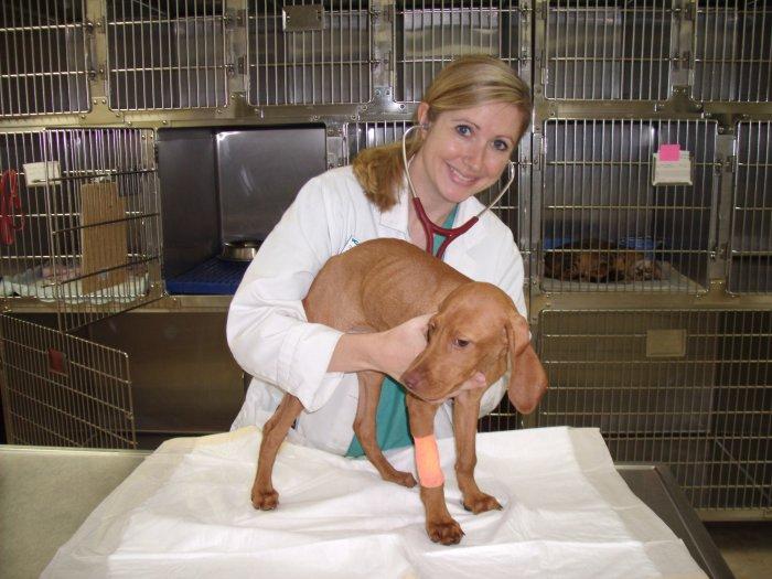 VCA Miracle Mile Animal Hospital image 4