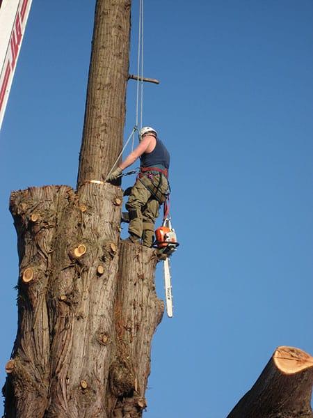 Archon Tree Services, Inc. image 9