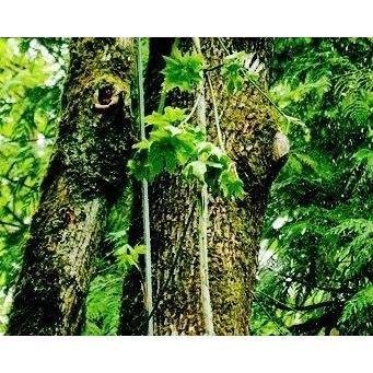 Cavall's Tree Service image 1