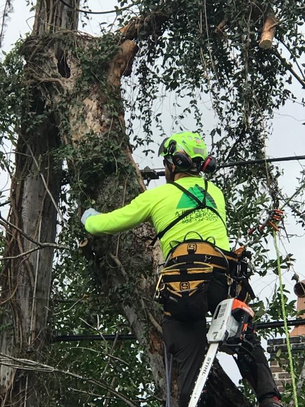 S & L Tree Service & Stump Grinding image 8
