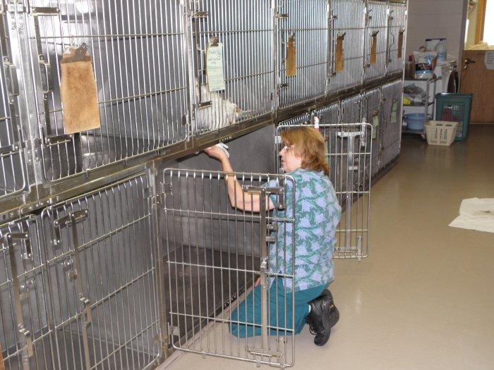 VCA Shadeland Animal Hospital image 3