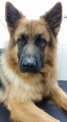 Maramiao pet shop allevamento di animali bagno a ripoli for I c bagno a ripoli capoluogo