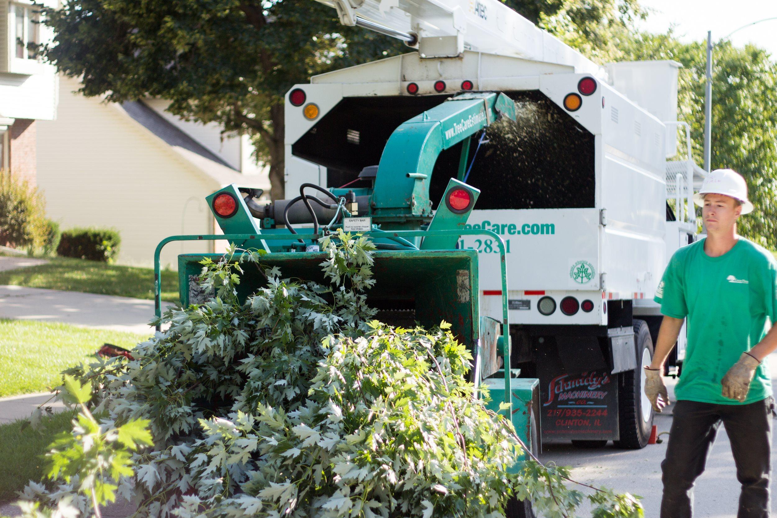 Great Plains Tree Care image 3