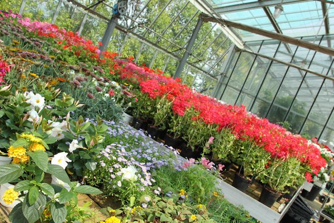 Vivaio santigaro vivai piante articoli da giardino al for Piante da vivaio
