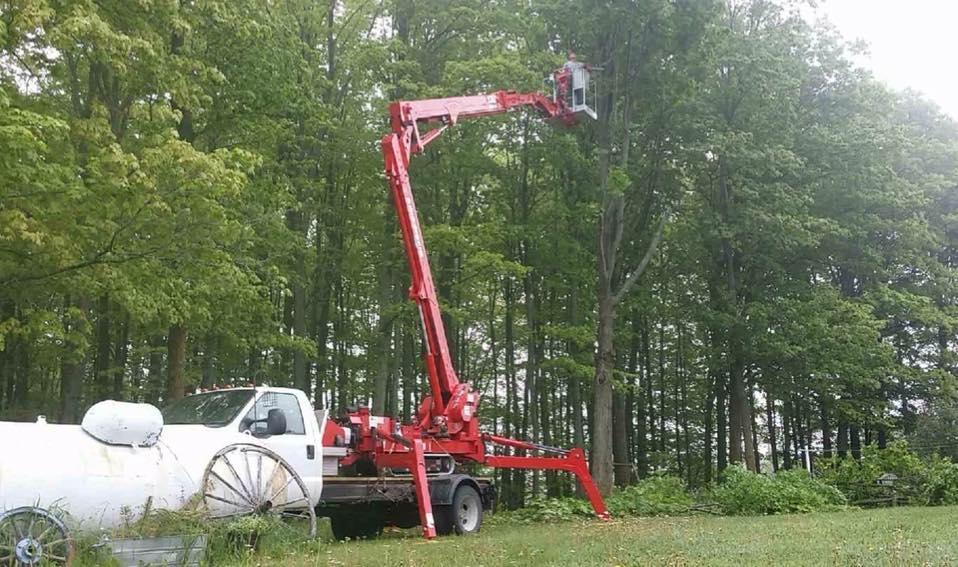 A-1 Tree Service, LLC image 8