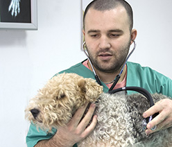 Brier Veterinary Hospital image 0