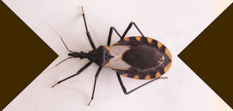 NJ Pest Control image 25