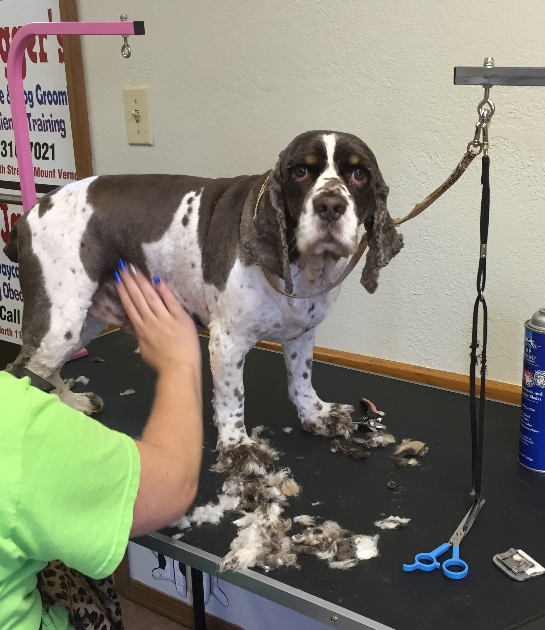 Jagger's Doggie Daycare, Dog Grooming, Training & Boarding image 14