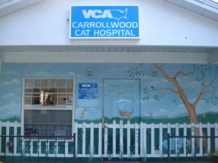 VCA Carrollwood Cat Hospital image 7