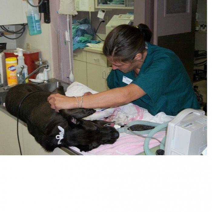 VCA Wellington Animal Hospital - CLOSED image 1