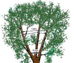 G E Tree Service Inc image 4