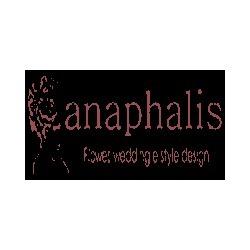 Fioreria Anaphalis