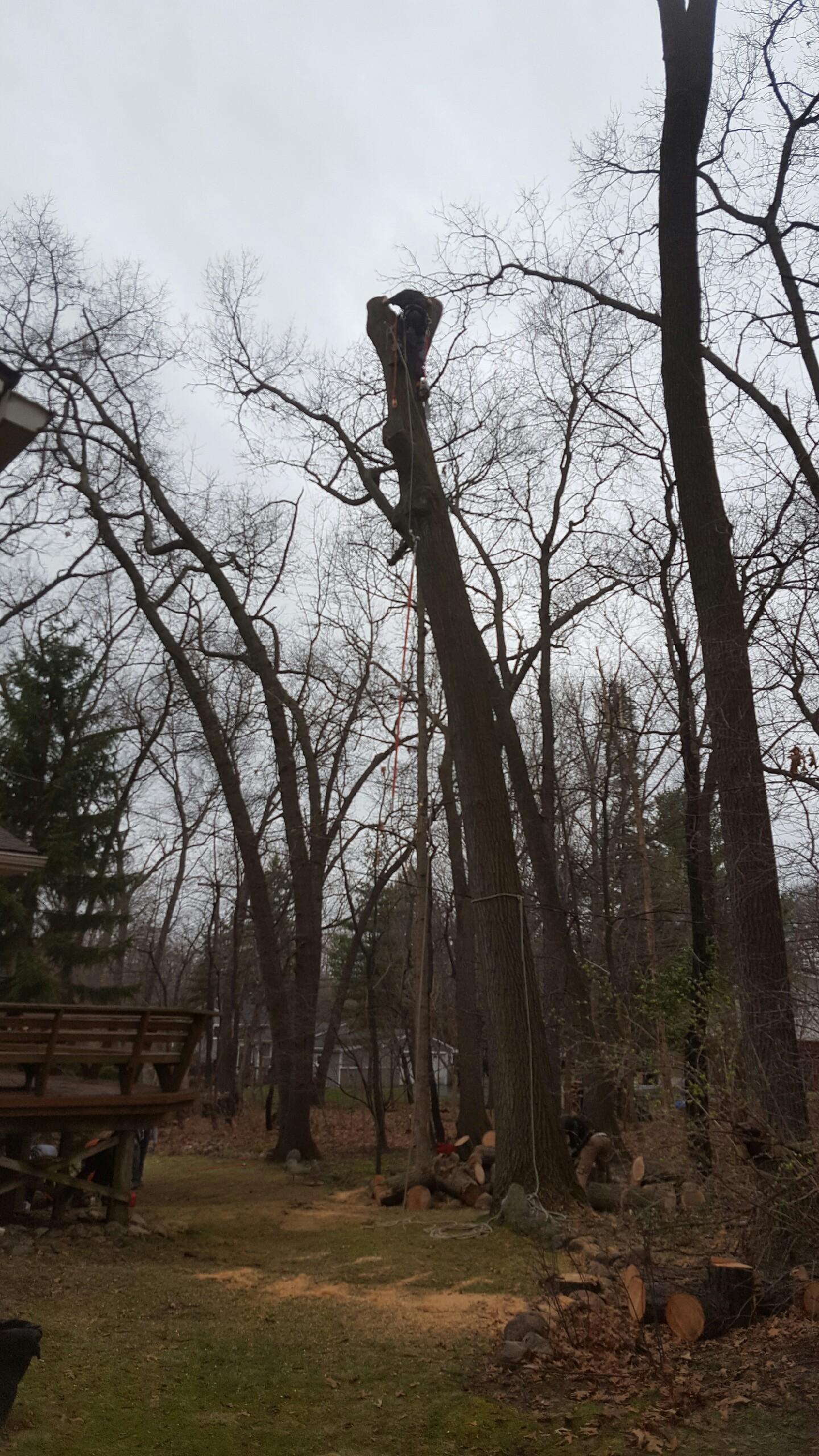 Coffman's Tree Service image 13