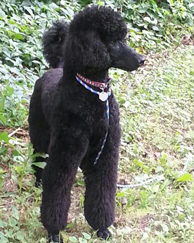 Bark Avenue Pet Salon image 2