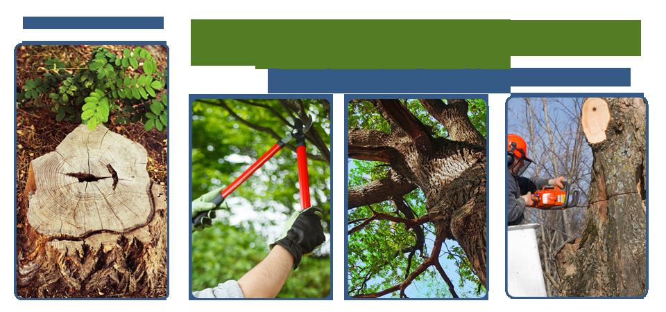Bryant's Tree Service image 0