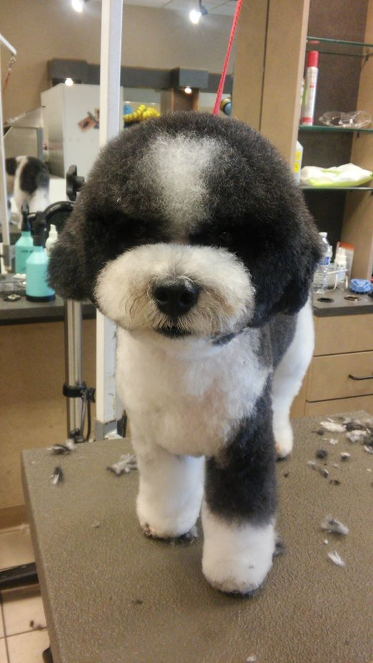Spotted dog pet grooming coupons near me in puyallup for Dog grooming salons near me