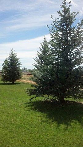 KJ Lawn Maintenance & Spraying, Inc. image 0