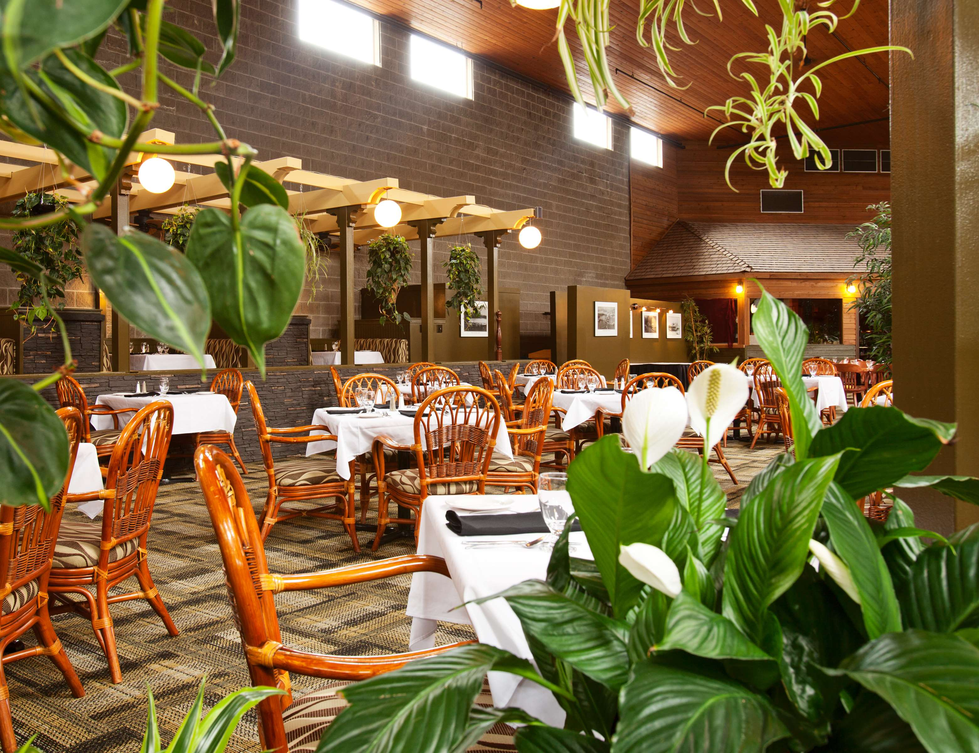 Best Western Rainbow Country Inn in Chilliwack: Family Restaurant in Tropical Atrium