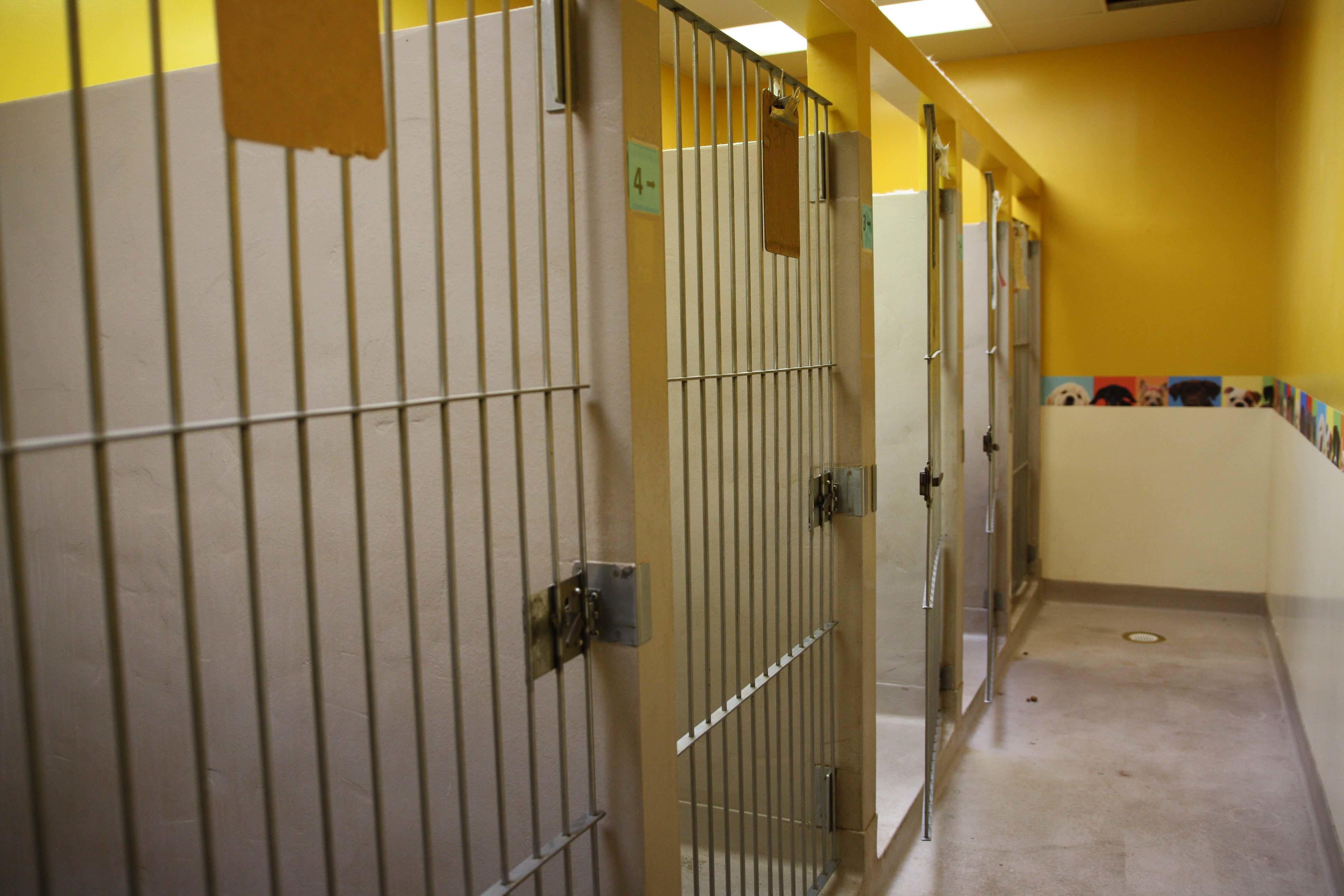 Skippack Animal Hospital image 8