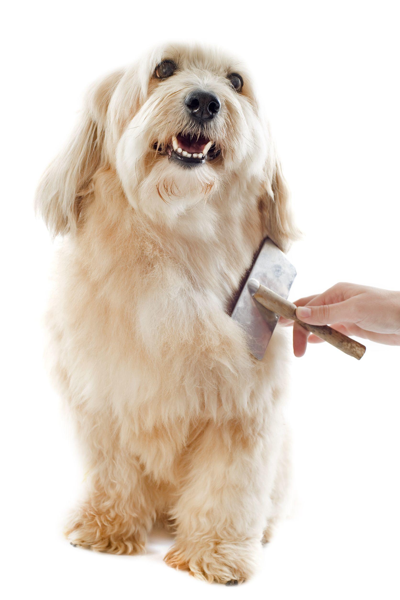 Pup Culture image 2