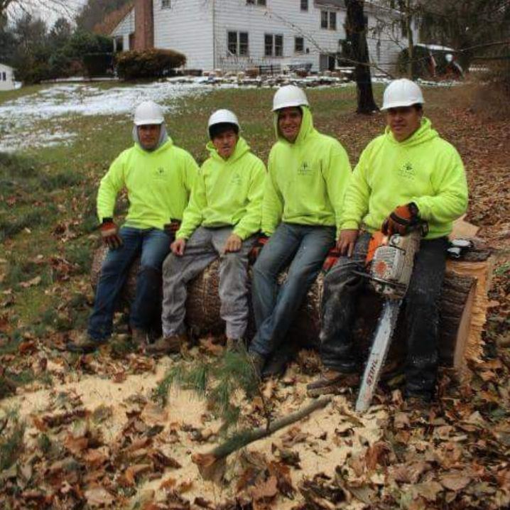 Four Brothers Tree Service Inc. image 27
