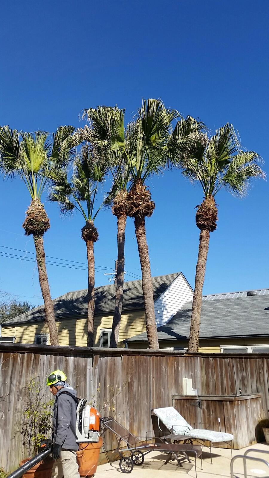 S & L Tree Service & Stump Grinding image 18