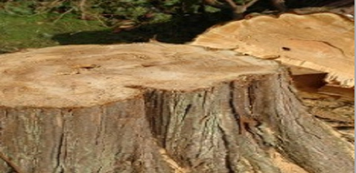 Cherokee Tree Service Of New Jersey image 6