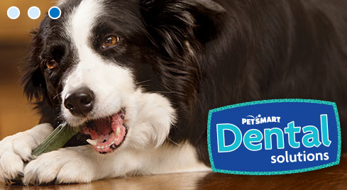 PetSmart - Coming Soon image 7
