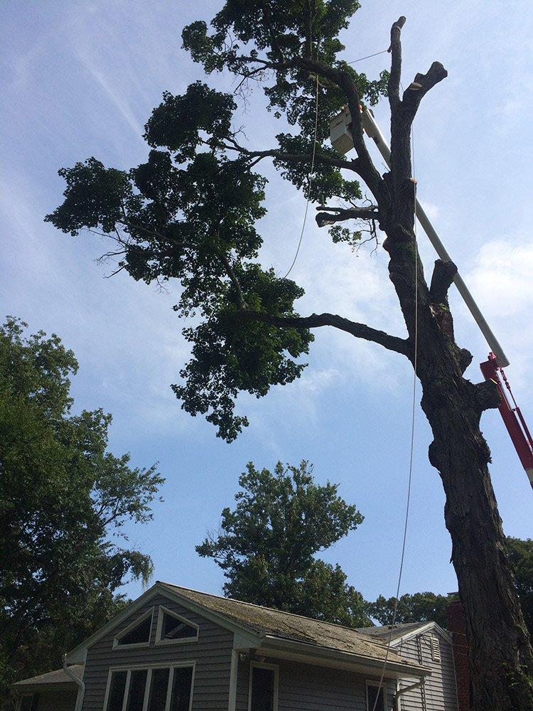 White Hills Tree Removal LLC image 6