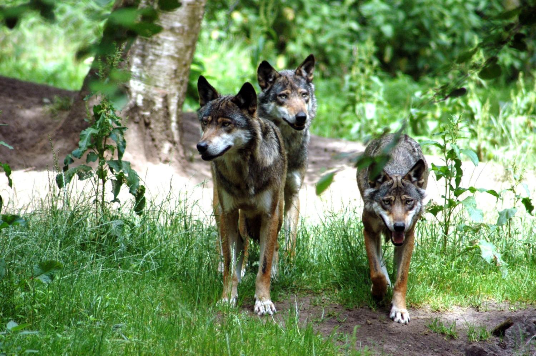 Bild der Wildpark Eekholt KG