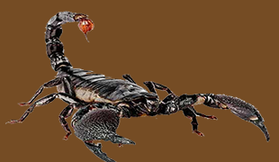 Atascosa Exterminating Co image 0