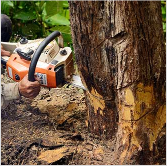 Tree Removal. When you want your tree removed, you can count on us. 0% financing is offered to you in certain cases.