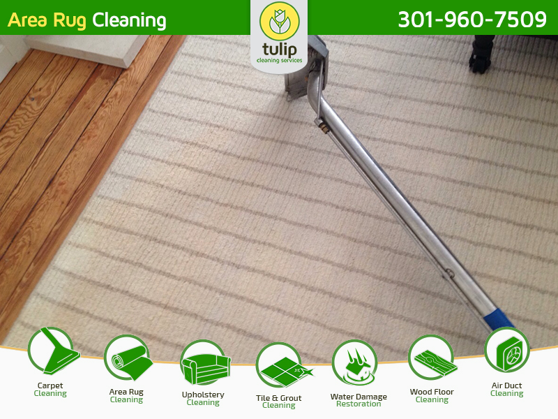 Tulip Cleaning Services Coupons Near Me In Potomac 8coupons