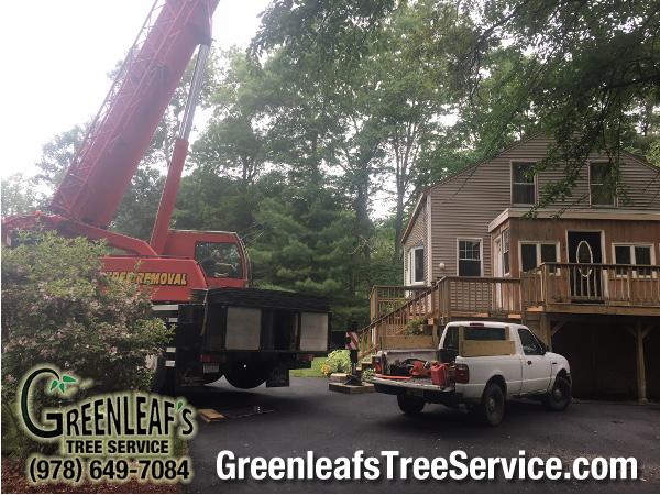 Greenleaf's Tree Service image 42