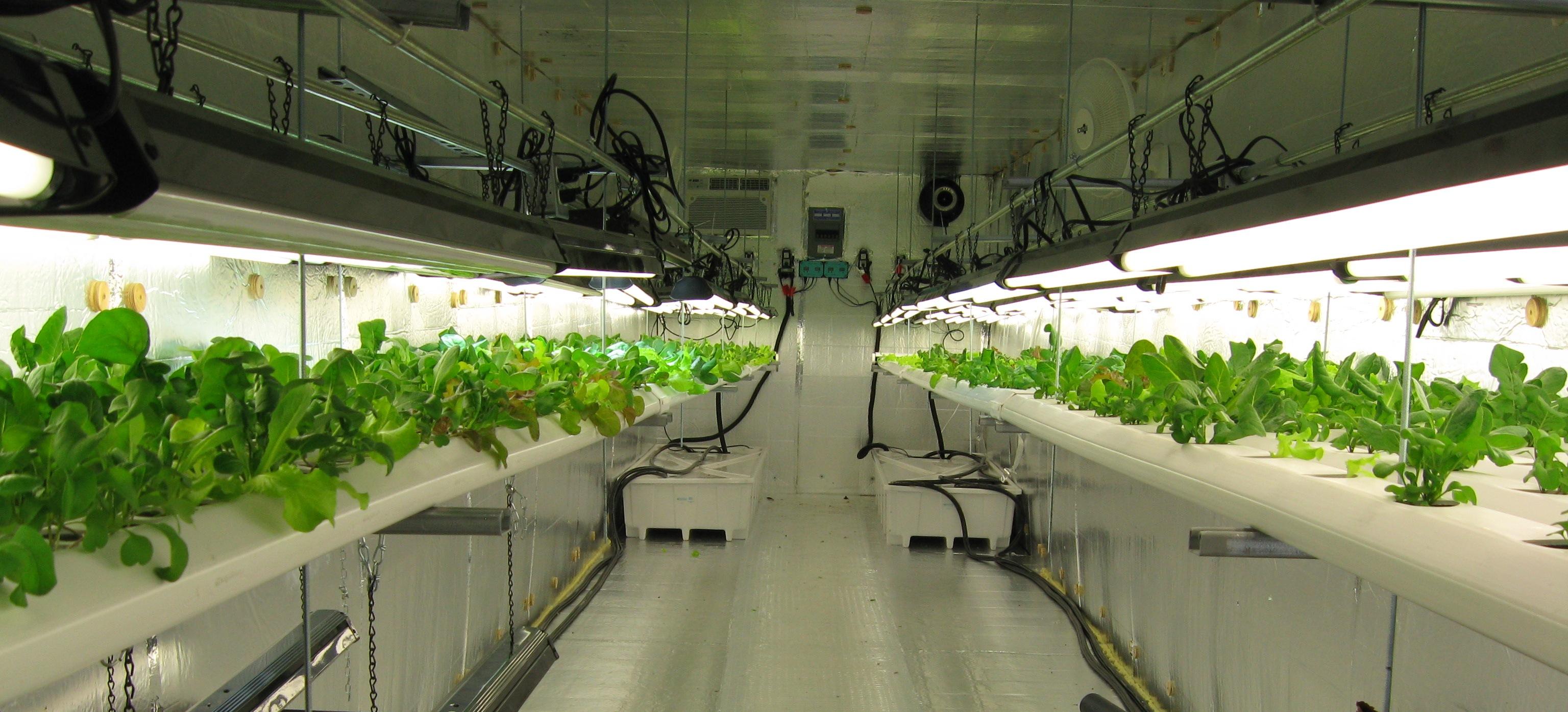 Выращивание растений под по 966