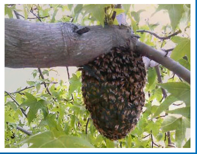 Bee Removal Specialist image 3