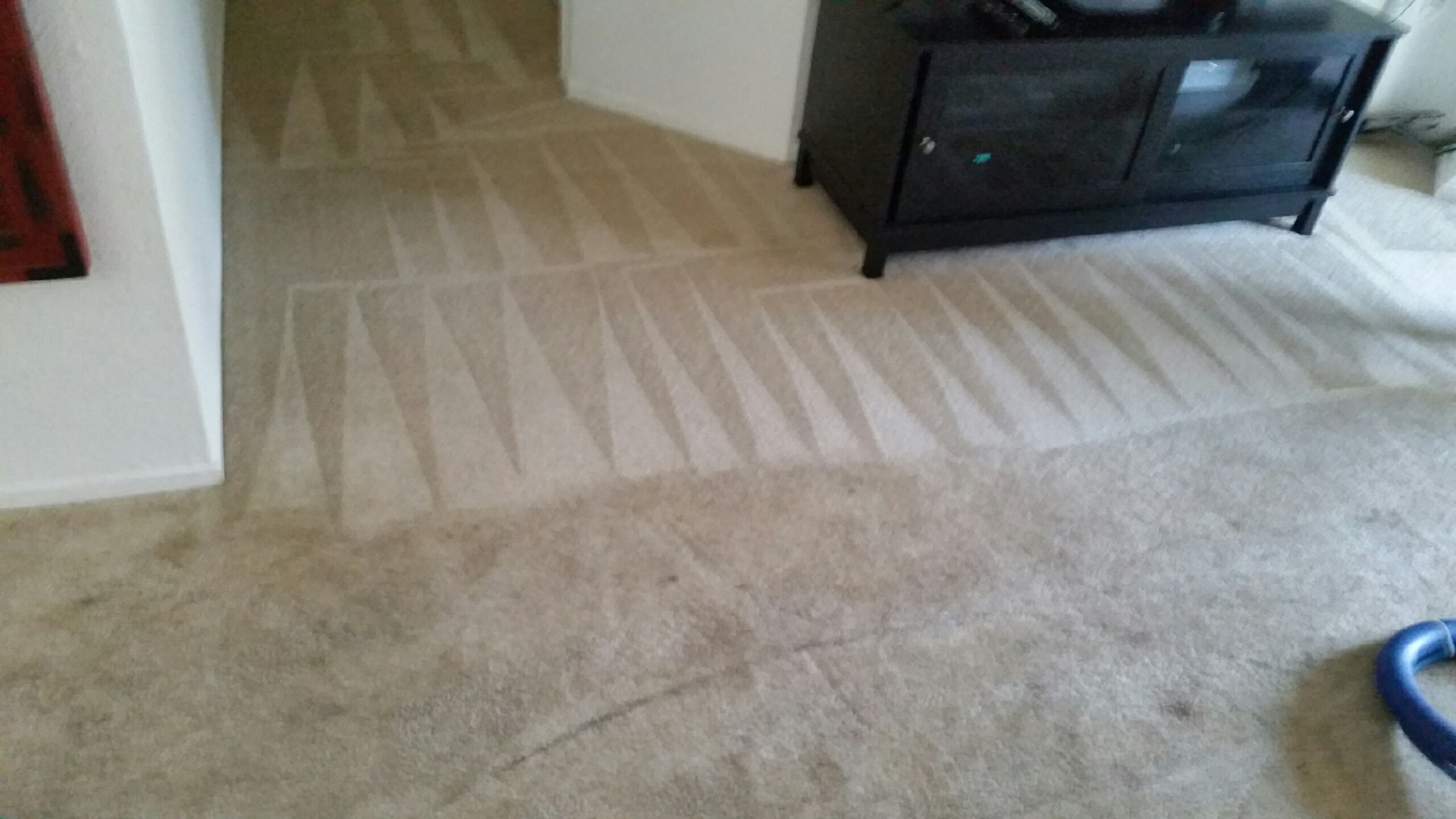 CleanDay Carpet Care image 1