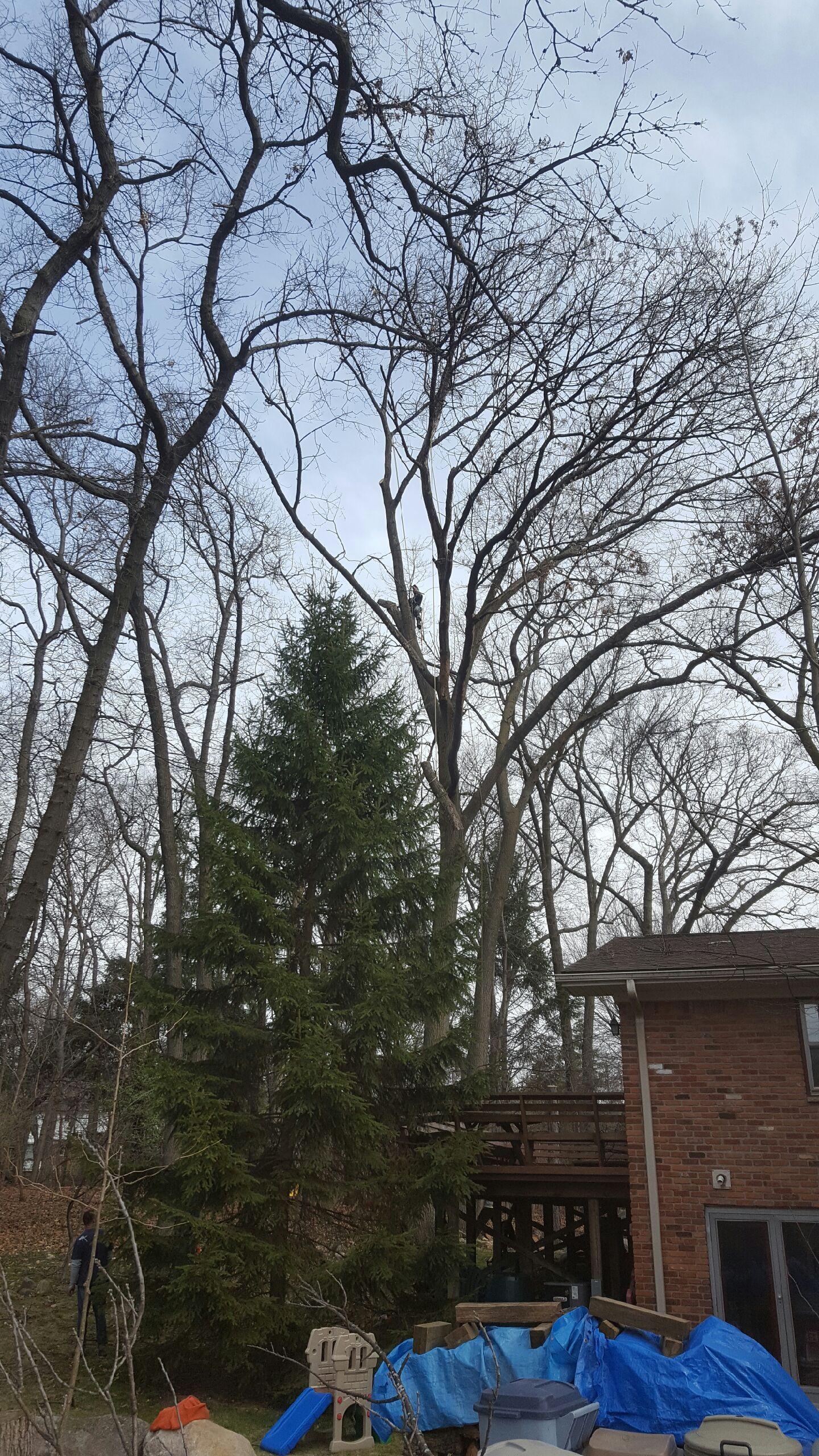 Coffman's Tree Service image 5