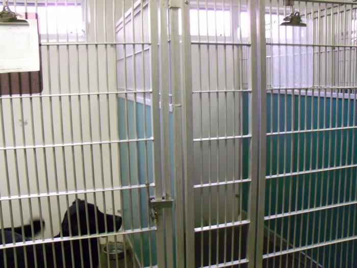 VCA Gulf Bay Animal Hospital image 2