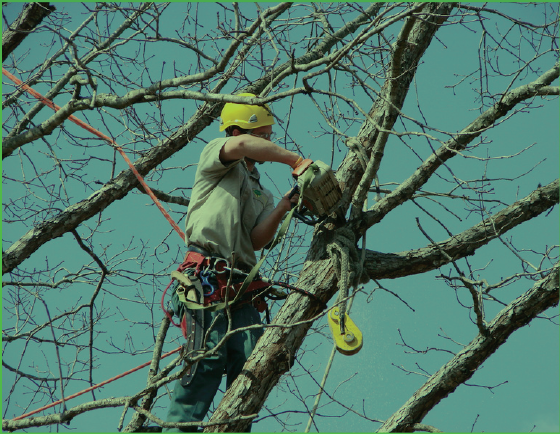 Houston Tree Removal Service image 0