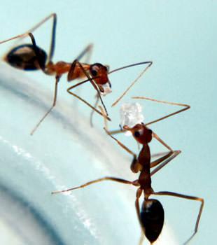 Burroughs Pest Control image 0