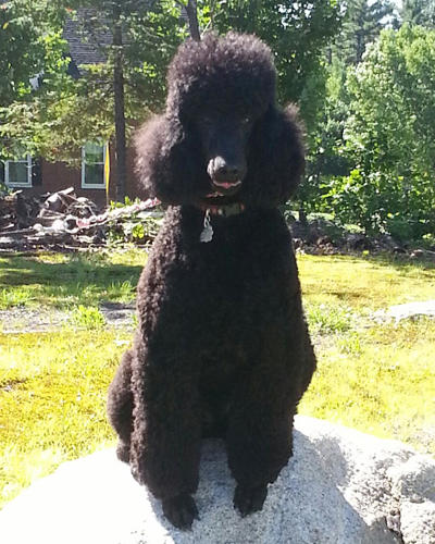 Bark Avenue Pet Salon image 7