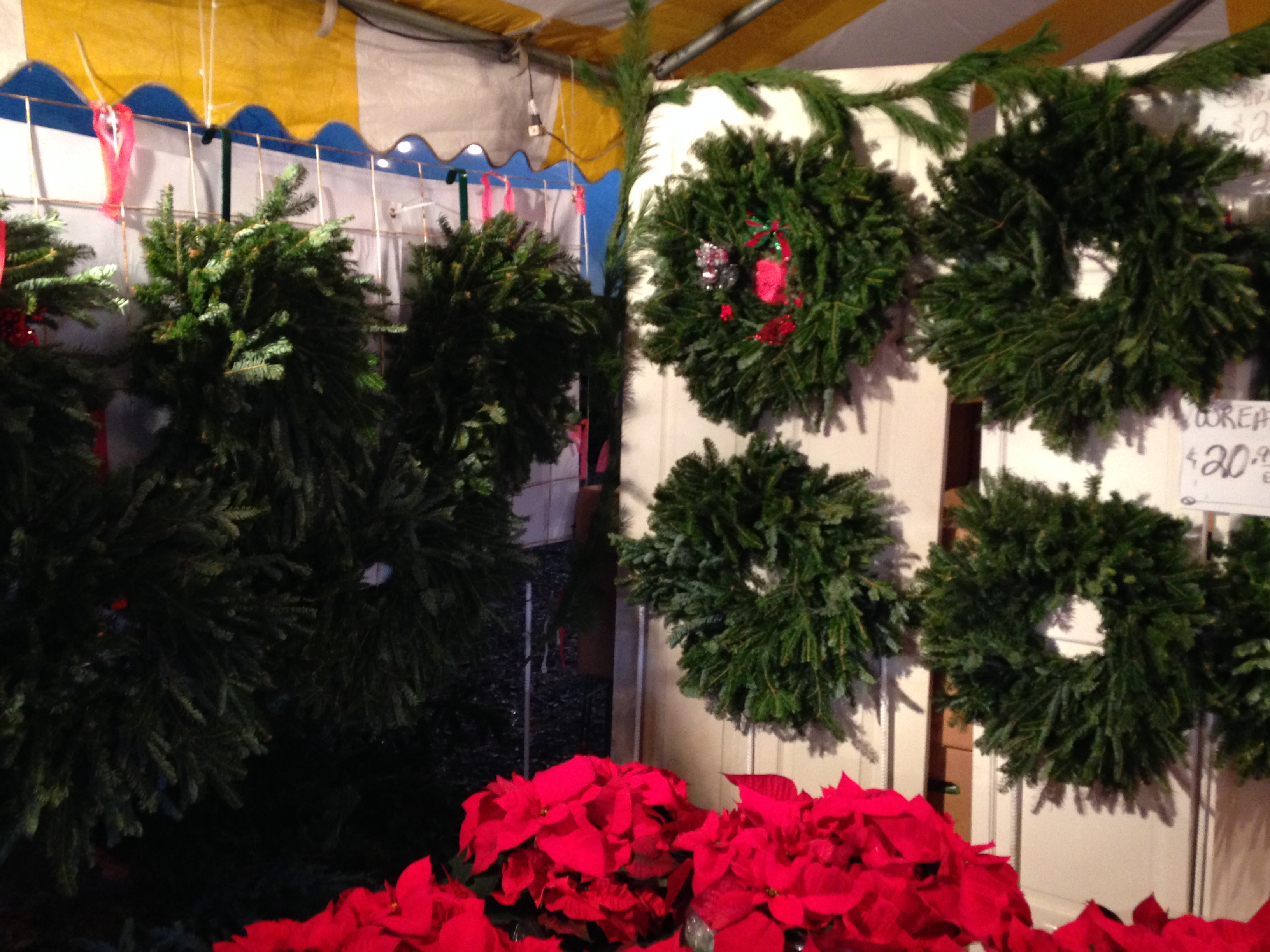 Dave's Christmas Tree Lot image 5