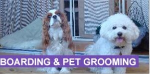 Bark Place Hotel & Pet Grooming image 4