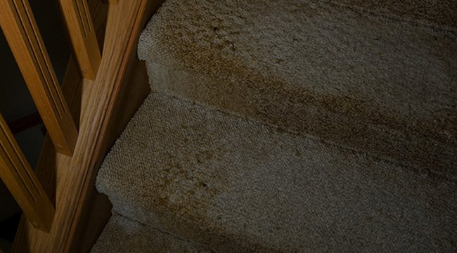 Father And Sons Carpet Cleaning LLC image 5
