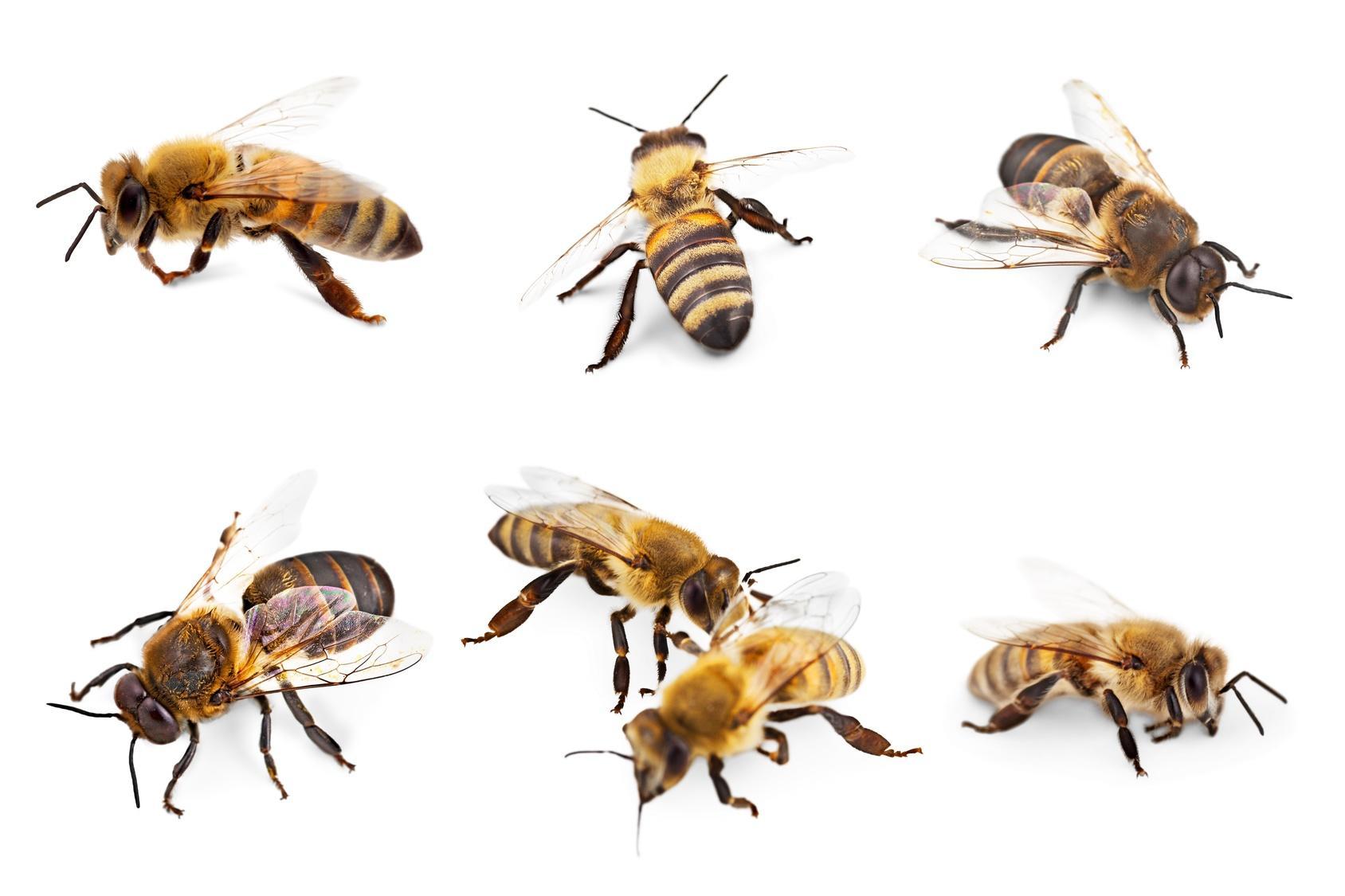 Verminator Pest Control LLC image 12
