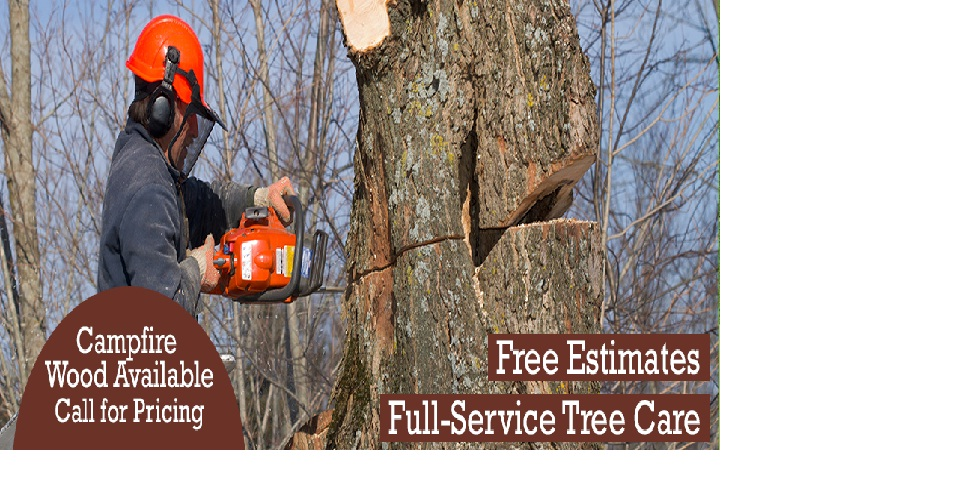 Tom's Tree Service image 0