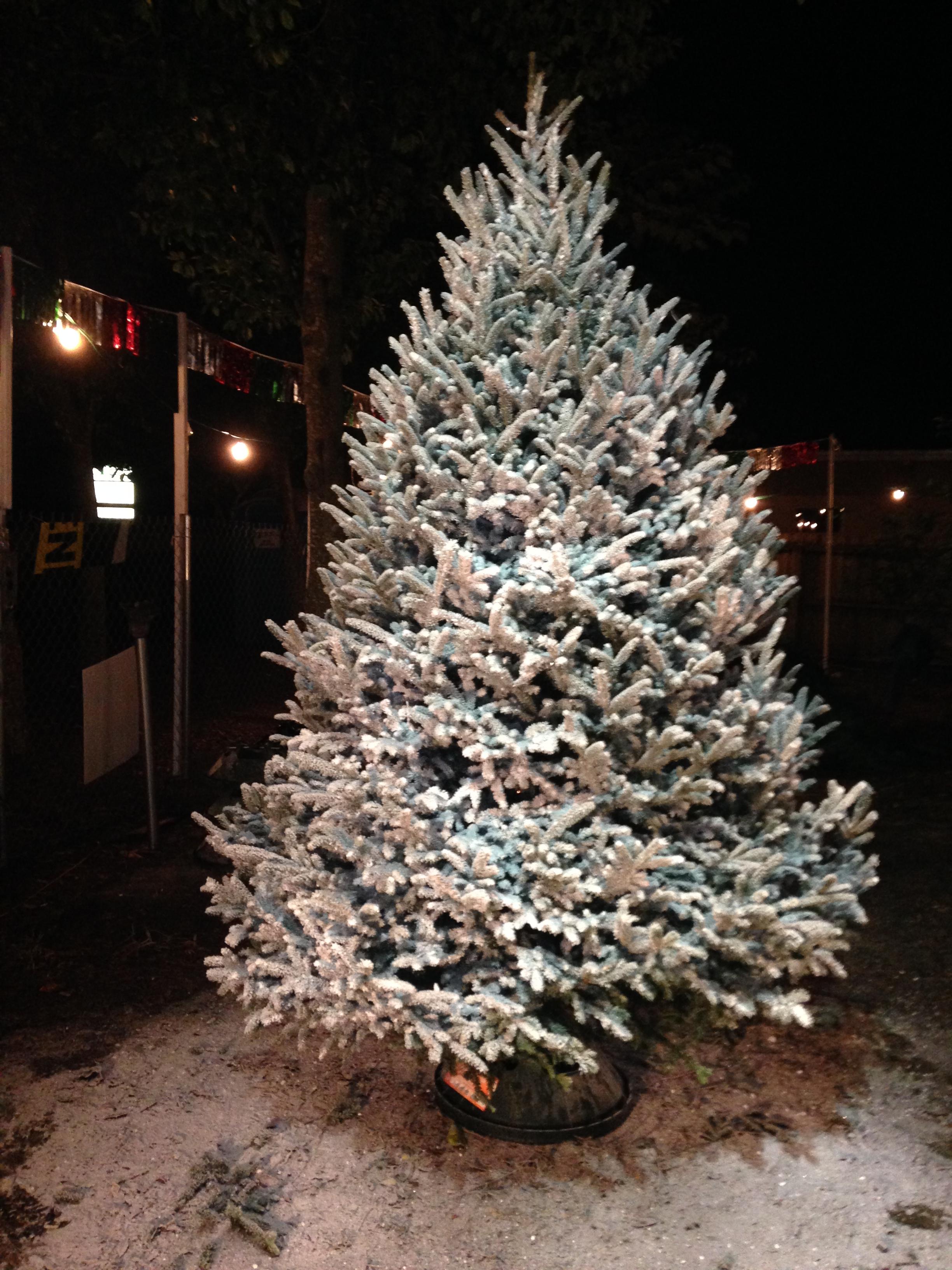 Dave's Christmas Tree Lot image 23