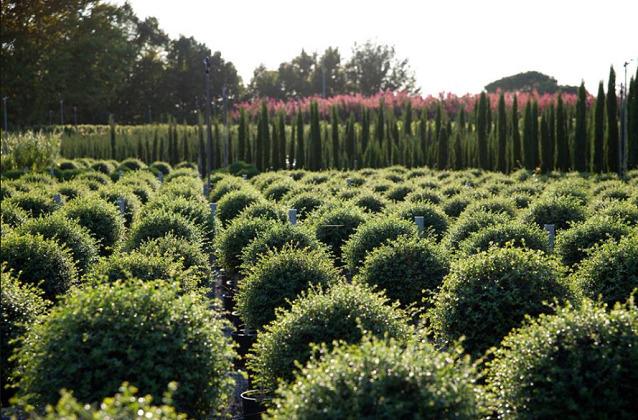 Vivai bartolini emiliano fiori e piante naturali for Vivai a pistoia