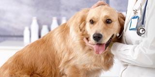 Teeter Veterinary Services image 4